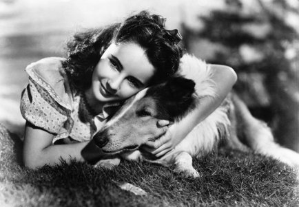 53-47420-elizabeth-taylor-in-courage-of-lassie-1519410905